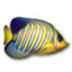 小鱼动态桌面